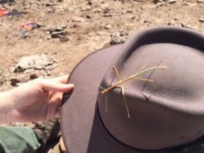 A cute walking stick on Gabriella Zaragosa's hat